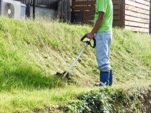 スギナという雑草はまさに地獄草!対策をして悩みから解放されよう