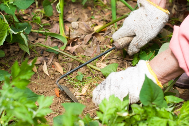 草刈りの便利グッズで雑草対策を楽に!草刈りを簡単にするコツ