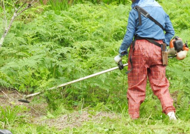雑草の種類はこんなにある!それぞれの特徴や駆除方法をご紹介します