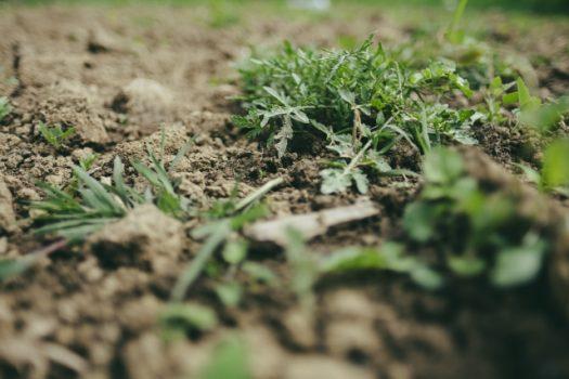 そもそも草刈りとはどのような作業か