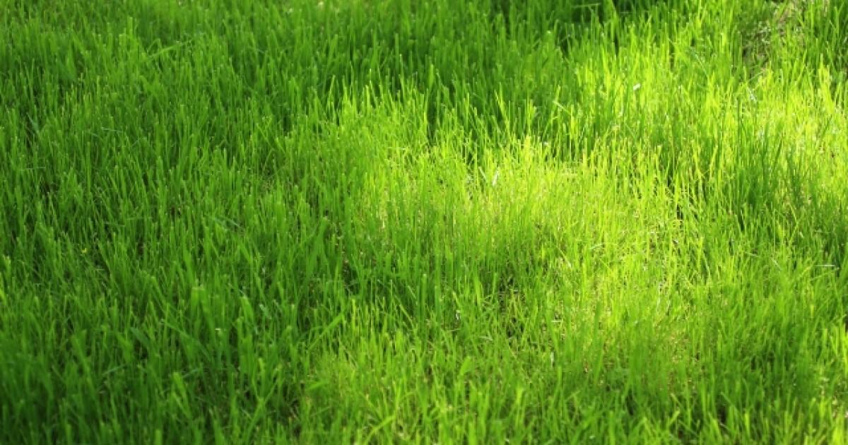 雑草対策 グランドカバー