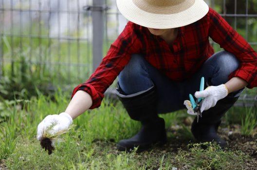 草刈りをするのに使用する道具