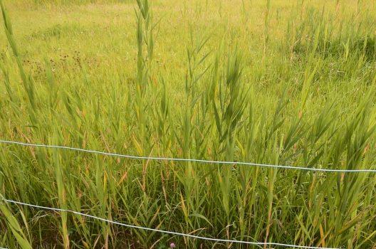庭の手入れは雑草対策で決まる!効果を高める3つのポイントもご紹介