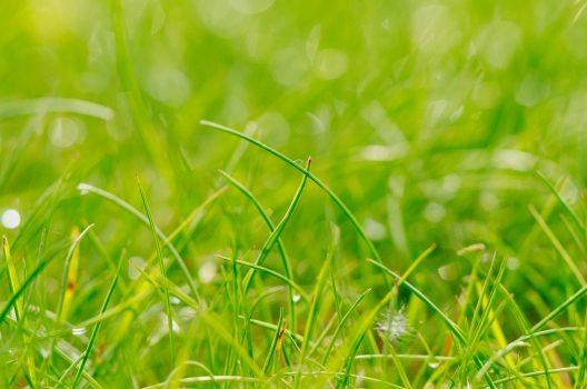 芝生の基本的な張り方
