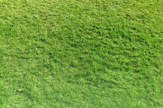 芝生の処分は自分でも可能。しかし総合的に見れば業者依頼がお得?