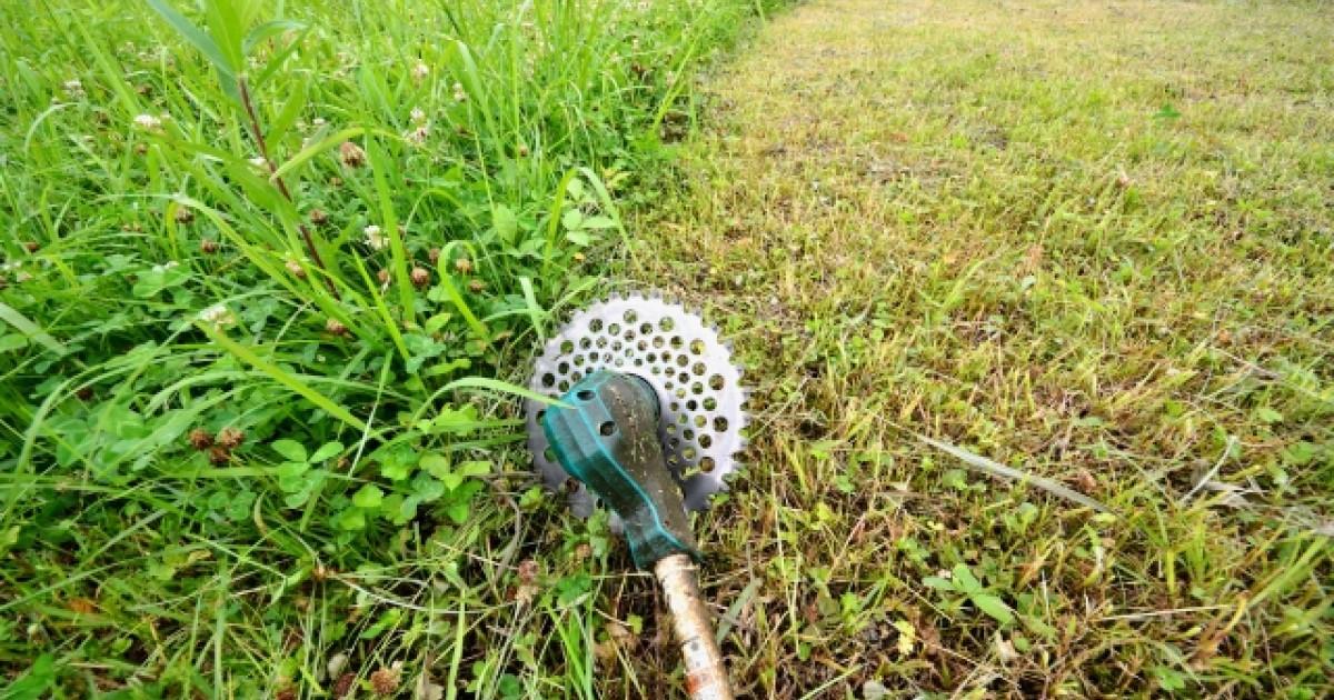 空き地の草刈り