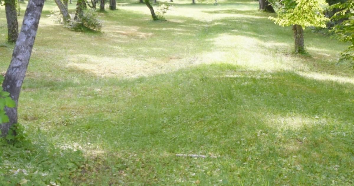 芝生は手入れが大変