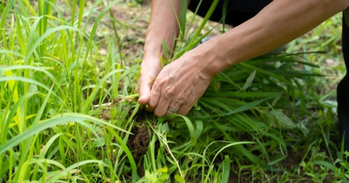 空き地の雑草対策