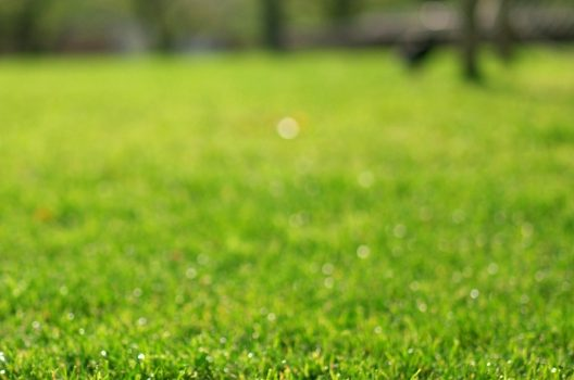 バミューダグラスの育て方|芝の基礎知識と失敗しないお手入れ方法