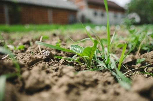 草の生えない土とは?特徴と施工方法|雑草が生えることもある?