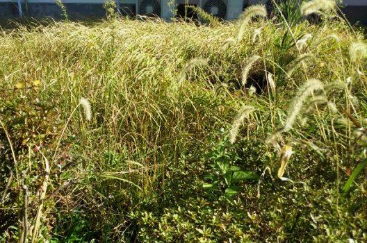 雑草の種類はたくさん!中には厄介なものも|駆除のコツも解説します