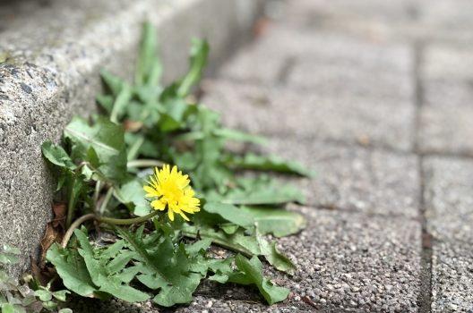 なぜアスファルトに雑草が生える?その理由と対策を解説します!