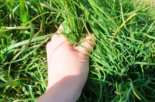 【グラウンドの除草】放置するとぬかるんで凸凹に!広範囲の除草方法