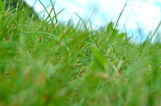 除草剤の安全性