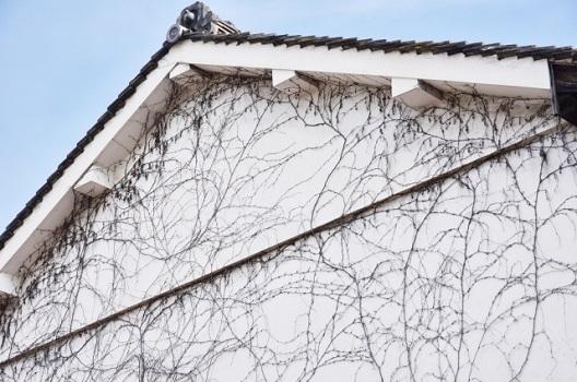 理由1:ツタの根が塗装をはがしてしまうことが多い