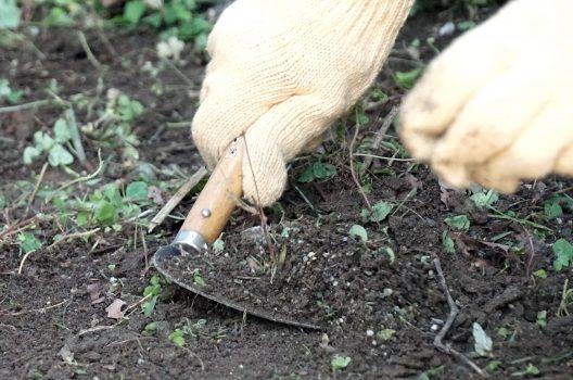 柔らかい土ほど雑草は生えてきにくい?