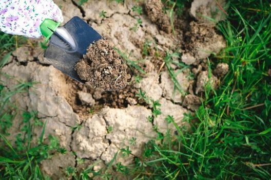 芝生をやめる方法