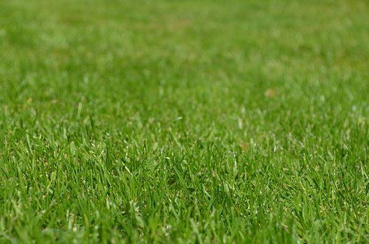 手入れが楽な芝生の種類