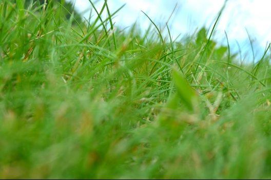 草刈りのタイミングはいつがベスト?