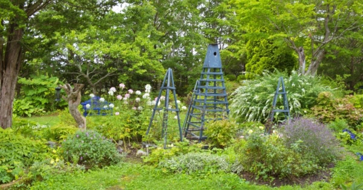 荒れた庭のお手入れ方法