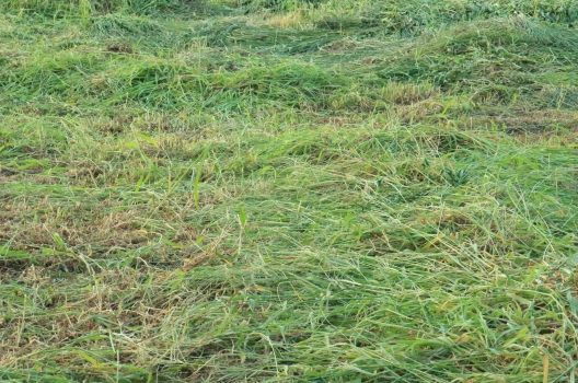 【1】作業内容で変わる草刈りの単価