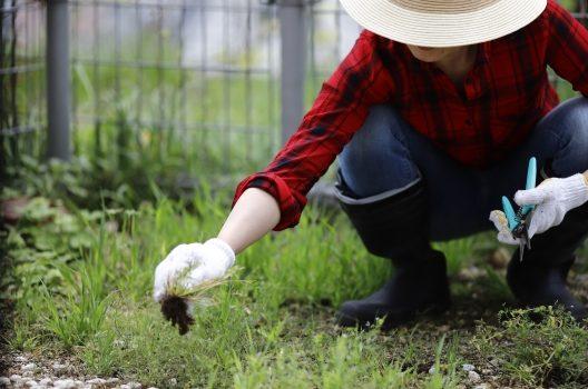 【1】雑草を抜く
