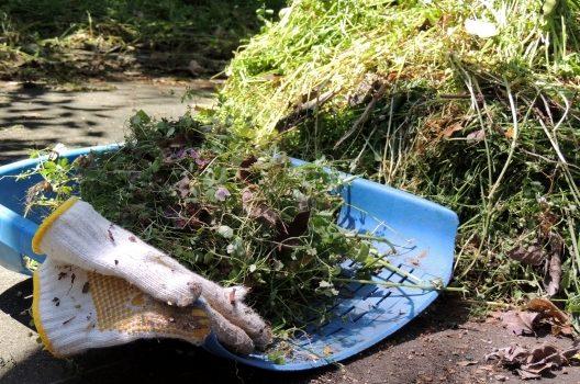 雑草の処理をしよう