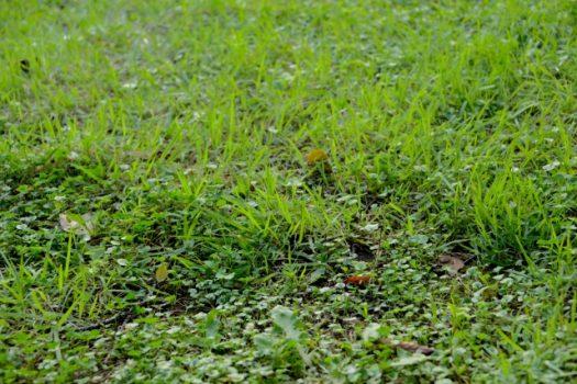 よくある雑草対策のメリットデメリット