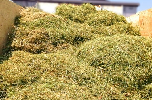 【刈草の処分方法】野焼きはダメ!可燃ゴミ?埋めるデメリットもある