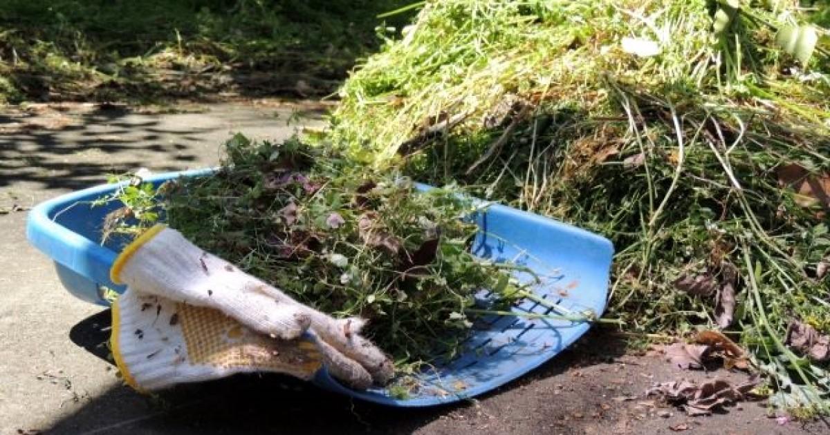 家の周り雑草対策