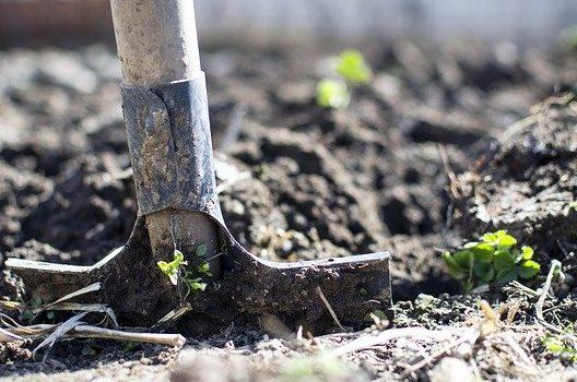 土に埋めるときの注意点