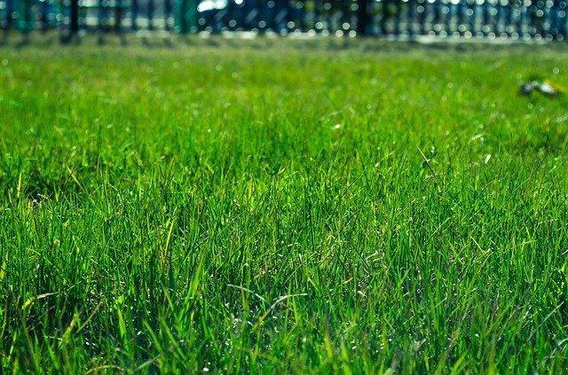 芝生の雑草の簡単な除草方法!除草剤や業者を活用してお手入れを楽に